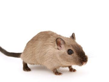 Aprende a acabar los ratones, cucarachas y otros insectos