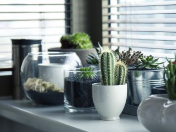 plantas para decorar en interiores