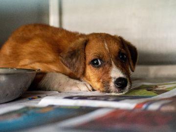 aplicaciones móviles para saber qué productos son de crueldad animal