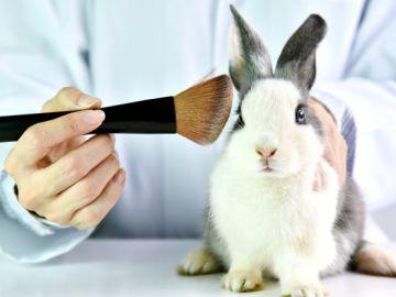 Conejo maquillado