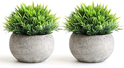 plantas decorativas en cuencos